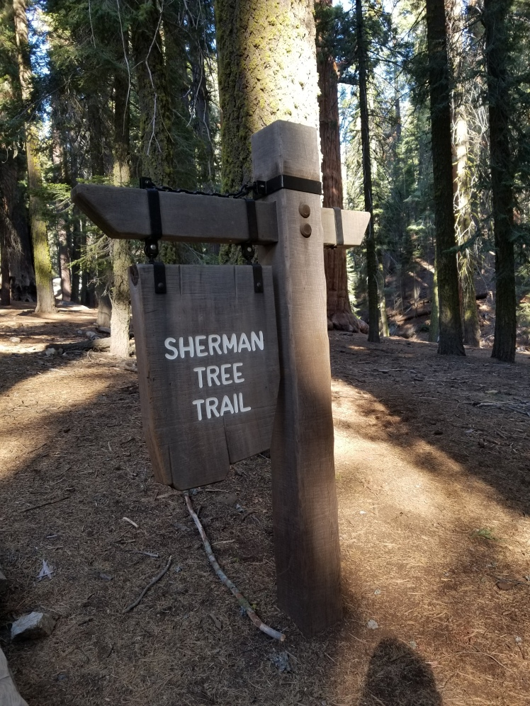 Sherman Tree Trail, Sequia National Park, California, USA www.weareinfinite.blog