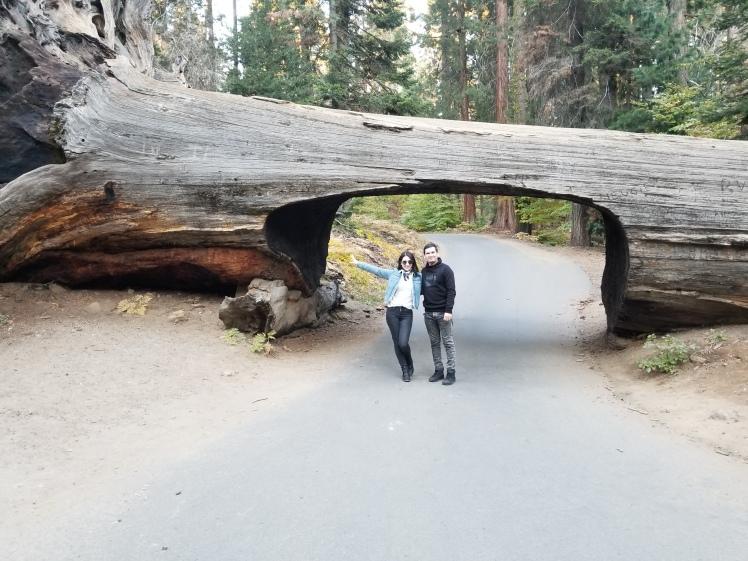 Tunnel Log, Sequia National Park, California, USA www.weareinfinite.blog